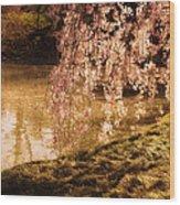 Romance - Sunlight Through Cherry Blossoms Wood Print