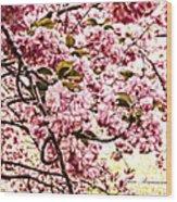 Romantic Cherry Blossoms Wood Print
