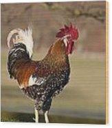 Rooster Gallus Gallus Northumberland Wood Print