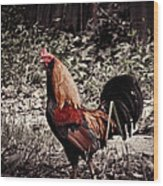 Rooster Red Wood Print
