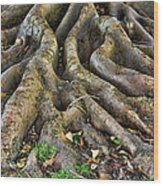 Roots Of Glory Wood Print
