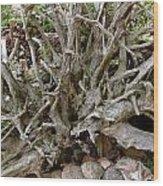 Roots Of Life Wood Print