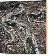 Roots Wood Print by Shane Rees