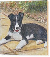 Rory Border Collie Puppy Wood Print by Richard James Digance
