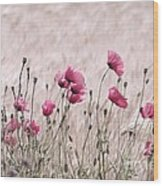 Pink Poppy Field  Wood Print