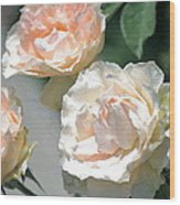 Rose 125 Wood Print
