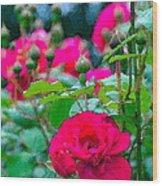 Rose 132 Wood Print