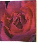 Rose 157 Wood Print