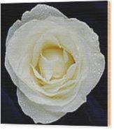 Rose 45 Wood Print
