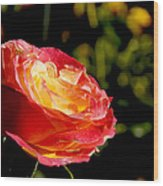 Rose After A Rain Shower Wood Print