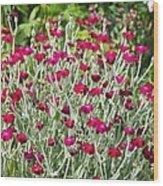 Rose Campion (lychnis Coronaria) Wood Print