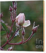 Rose Candelabra Wood Print