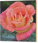 Rose Dew II Wood Print