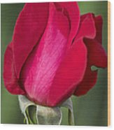 Rose Flower Series 1 Wood Print