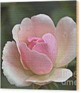 Rose Flower Series 12 Wood Print