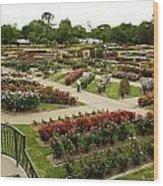 Rose Garden Park Tyler Texas Wood Print