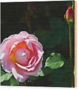 Rose In Chicago Botanic Garden Wood Print