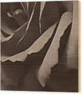 Rose In Sepia Wood Print