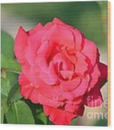 Rose In The Morninglight Wood Print