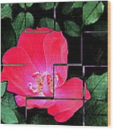 Rose Interrupted Wood Print