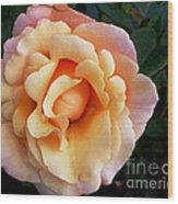 Rose Of Many Pastels Wood Print