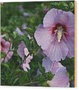 Rose Of Sharon Blooms In Sunshine Wood Print