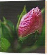 Rose Of Sharon Bud Wood Print