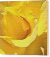 Rose Petal Flower Yellow Colorful Rose Floral Baslee Wood Print