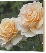 Rose Rosa Sp Just Joey Variety Flowers Wood Print
