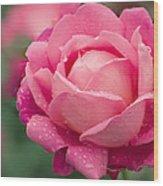 Rose (rosa 'star Of The Nile') Wood Print