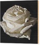 Rose Silver Anniversary Wood Print