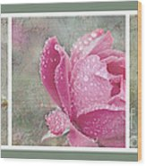 Rose Triptych 11 Wood Print