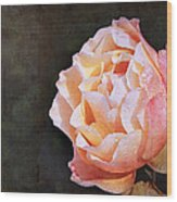 Rose With Dewdrops Wood Print