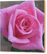 Rose With Droplets Wood Print