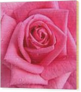 Rose With Droplets In Large-size Wood Print