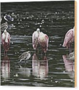 Roseate Reflections - Spoonbill Nature Scene Wood Print