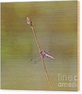 Roseate Skimmer Wood Print