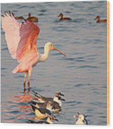 Roseate Spoonbill At The Bay Wood Print