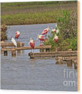 Roseate Spoonbills And Snowy Egrets Wood Print
