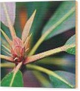Rosebay Rhododendron Bud Wood Print