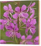 Rosebay Willowherb Wood Print