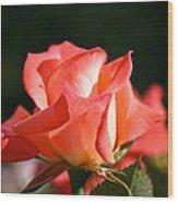 Rosebud Folklore Wood Print