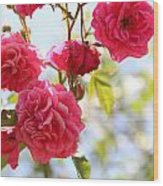 Roses Wood Print by Gal Ashkenazi