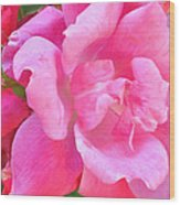 Roses Perfectly Pink Wood Print