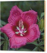 Rosey Blossom Wood Print