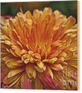 Rosey Glow Mum Wood Print