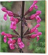 Rosey Leaf Sage Wood Print