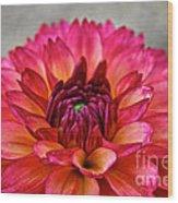 Rosy Dahlia Wood Print