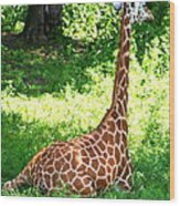 Rothschild Giraffe Wood Print