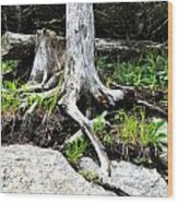 Rotted Roots Wood Print
